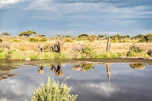Wildlife safari - 3 days / 2 nights, Serengeti National Park and Ngorongoro conservation area / crater, Tanzania