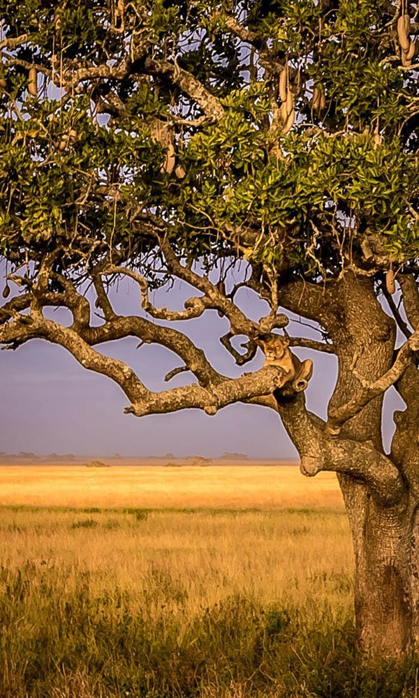 Tanzania national parks and destinations - Serengeti National Park