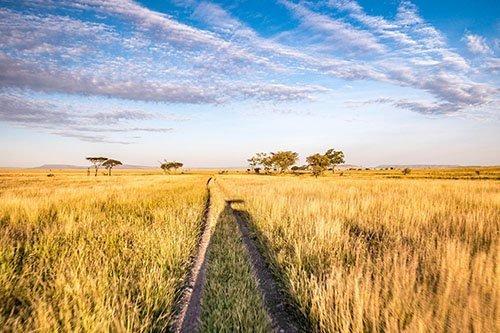 Wildlife safari - 3 days 2 nights, Lake Manyara or Tarangire National Park, Serengeti National Park and Ngorongoro conservation area / crater, Tanzania