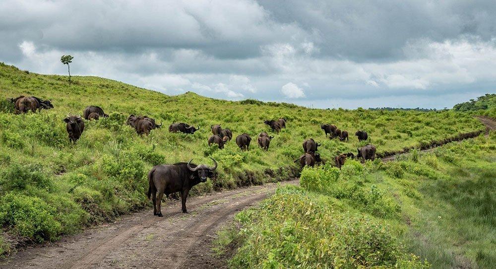 Arusha National Park 1 day safari Tanzania, day trip, Moshi