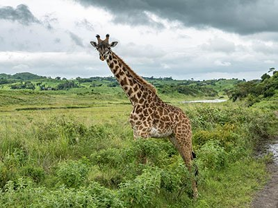 Tanzania national parks and destinations - Arusha National Park