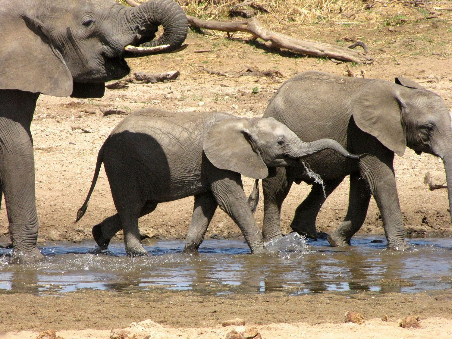 Tanzania national parks and destinations - Tarangire National Park