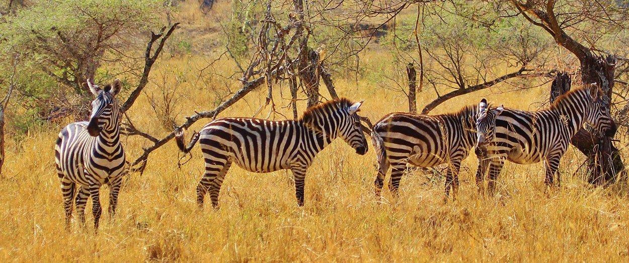 Wildlife safari - 3 days 2 nights, Lake Manyara, Tarangire National Park and Ngorongoro conservation area / crater, Tanzania