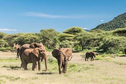 Wildlife safari - 2 days 1 night, Lake Manyara or Tarangire National Park and Ngorongoro conservation area / crater, Tanzania
