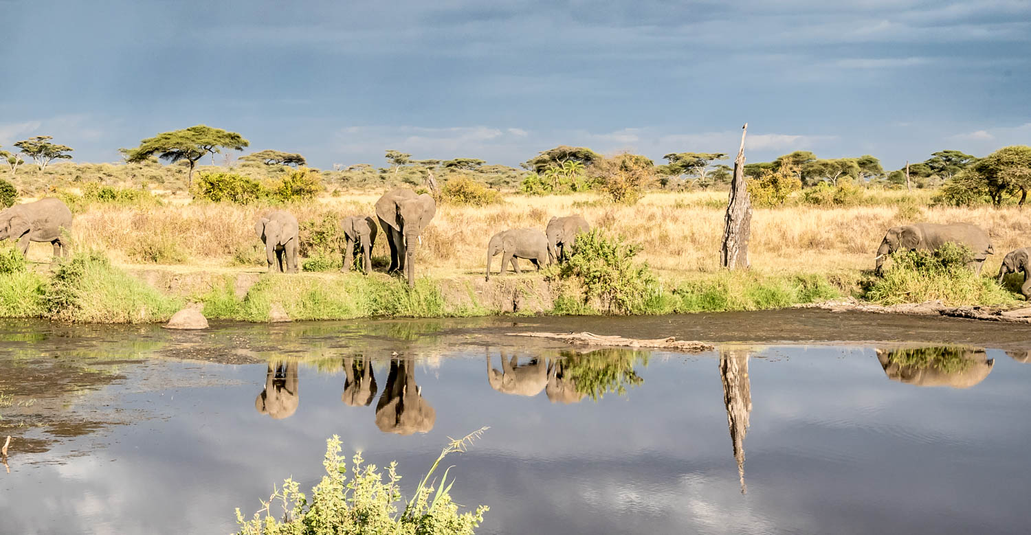 Wildlife safari - 4 days 3 night, Lake Manyara or Tarangire National Park, Serengeti National Park and Ngorongoro conservation area / crater, Tanzania - big five