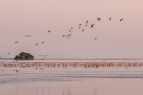 Wildlife safari - 2 days 1 night, Lake Natron, Tanzania - flamingo