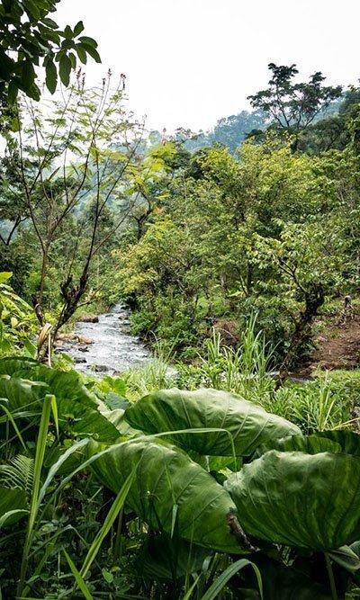 MATERUNI WATERFALLS AND COFFEE TOUR DAY TRIP, TANZANIA
