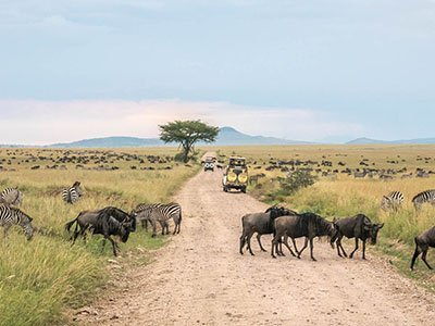 Wildlife safari packages - Lake Manyara, Tarangire, Serengeti national park, Ngorongoro conservation area / crater, Lake Natron, Lake Eyasi