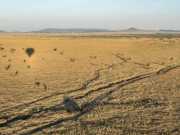 Wildlife safari - 1 day hot air balloon extension, Serengeti National Park, Tanzania