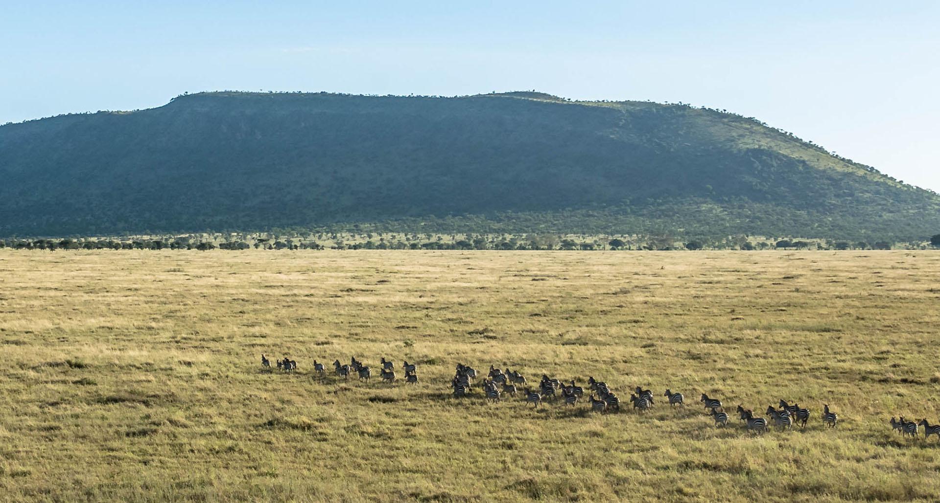 Wildlife safari - 1 day hot air balloon extension, Serengeti National Park, Tanzania