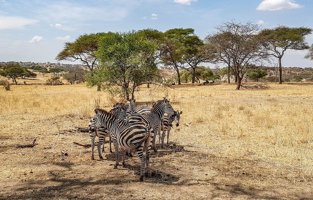 Wildlife safari - 2 days 1 night, Lake Manyara and Tarangire National Park, Tanzania