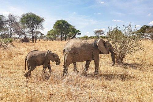Wildlife safari - 2 days 1 night, Lake Manyara and Tarangire National Park, Tanzania