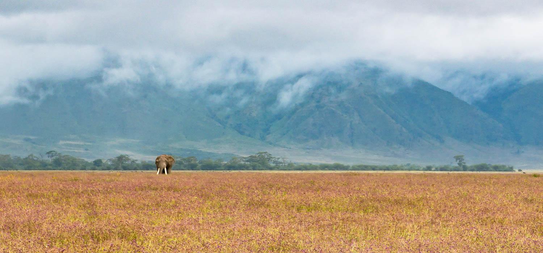 Wildlife safari - 5/6 days 4/5 night, Lake Manyara, Tarangire National Park, Serengeti National Park and Ngorongoro conservation area / crater, Tanzania - big five