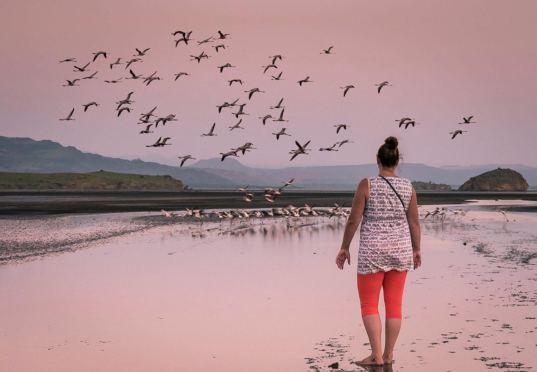 Wildlife safari - 2 days 1 night, Lake Natron, Tanzania - flamingo