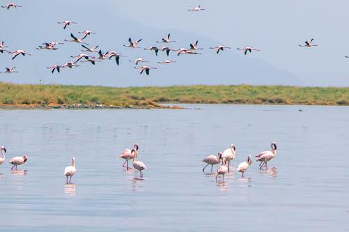 Wildlife safari - Unknown lands - 8 days 7 nights or 9 days 8 nights, Lake Natron, Maasai, Serengeti, Ngorongoro, Lake Manyara, Tarangire, Tanzania