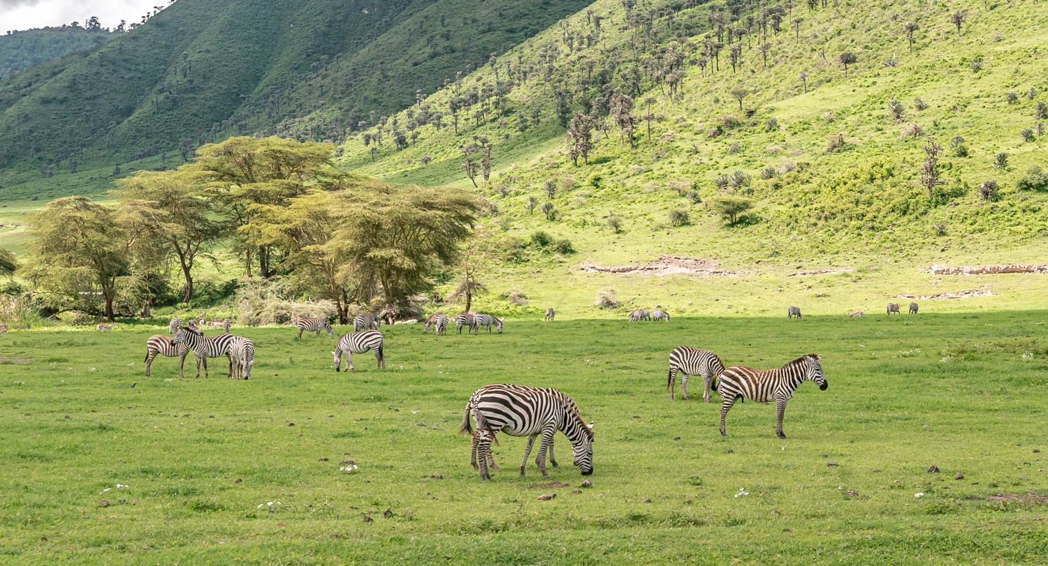 Wildlife safari - 3 days 2 nights, Lake Manyara, Tarangire National Park and Ngorongoro crater, Tanzania