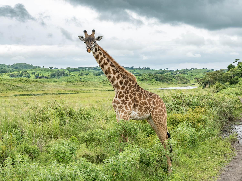 Parcs nationaux de Tanzanie - Parc national d'Arusha