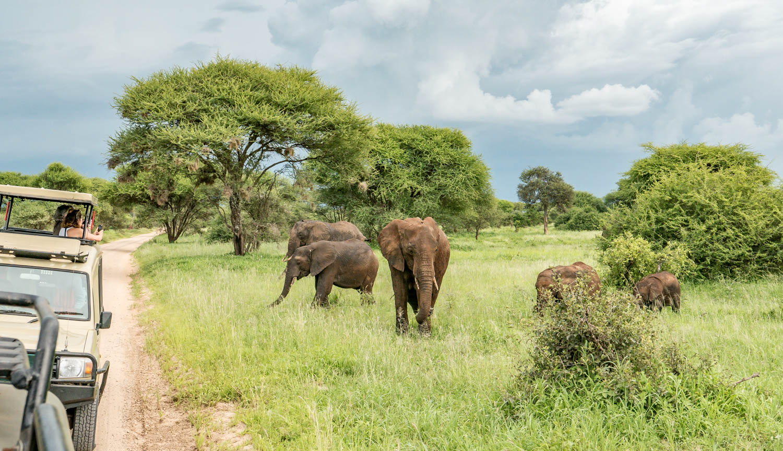 Parcs nationaux de Tanzanie - Parc national de Tarangire