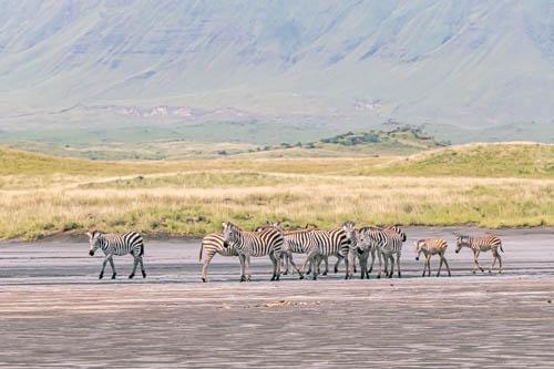 Wildlife safari - 3 days 2 nights, Lake Natron off the beaten path, Tanzania