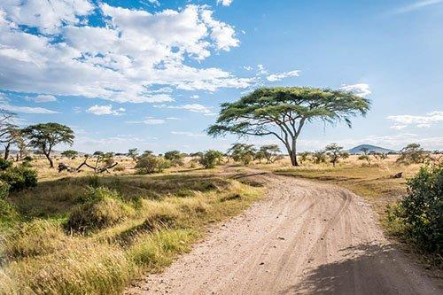 Tanzania national parks - Serengeti, Lake Manyara, Tarangire, Ngorongoro, Lake Natron, ...