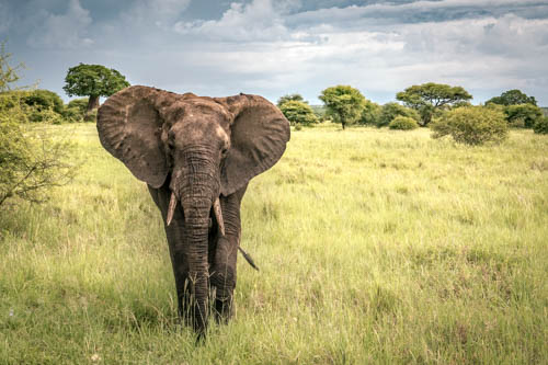 Wildlife safari - 7 or 8 days, 6 or 7 nights, Lake Manyara, Tarangire National Park, Serengeti, Ngorongoro crater and Lake Natron, Tanzania